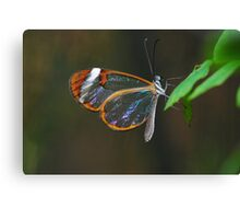 """Cellophane Wings"" Canvas Print"