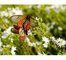 Spring Fever Photographic Print