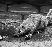 Squirrel Central Park NYC by Sandy Taylor