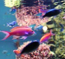 Monterey Bay Aquarium - Coral Reef Exhibit by nick9809