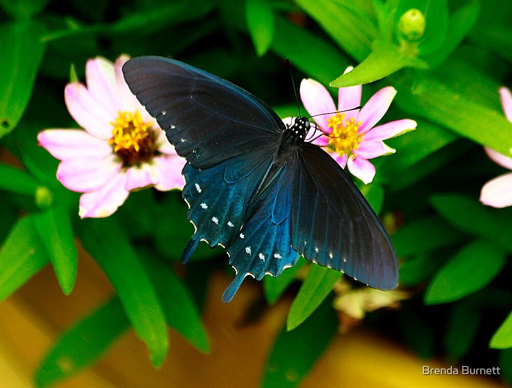 Blue Angel by Brenda Burnett