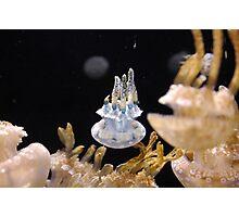 Jellyfish - Monterey Bay Aquarium Photographic Print