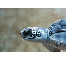 Green Sea Turtle - Monterey Bay Aquarium Photographic Print