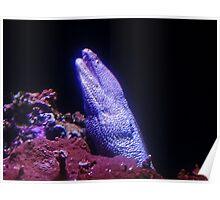 Eel in the Dark Poster