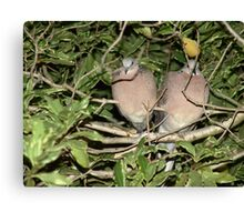 Two in a bush Canvas Print