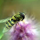 Hover Fly by Mark Durant