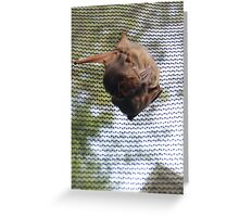 momma bat with three babies Greeting Card