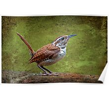 Carolina Wren in Profile Poster