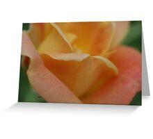 just peachy rose Greeting Card