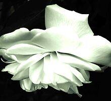 Silver Folds by Dawn B Davies-McIninch