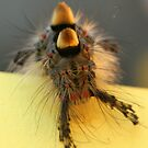 Hamish the hairy catterpillar! by Paul McGuire