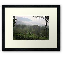 Gunung Mas Tea Gardens Framed Print
