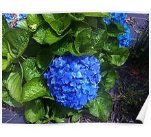 A Bundle of Blue Flowers Poster