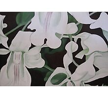 Orchids in High Contrast 2 Photographic Print
