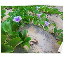 Tropical Flowers growing over Sand Poster