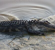 Alligator Coming Out by Paulette1021