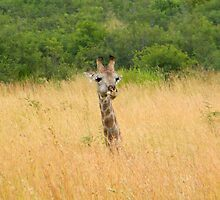 Pilanesburg National Park..... by DaveHrusecky