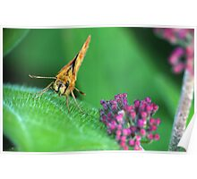 Painted Lady Says Hello Poster
