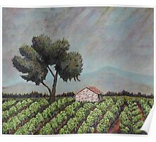Chateauneuf Vineyard  Poster