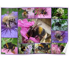 Bee-eautiful Bee Collage...... Poster