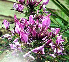 Purple Love  by Michelle Scott