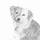 Long Haired Jack Russell Terrier by Elizabeth Hibberd