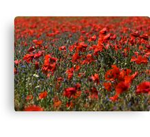 The Poppy Fields Canvas Print