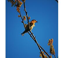 Spring Song Photographic Print