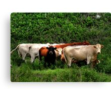 In the Huddle!!! Canvas Print