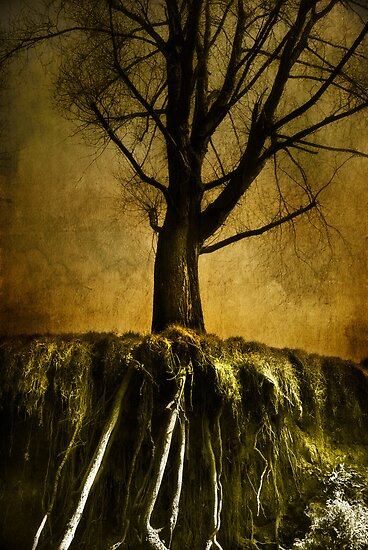 Roots by ajgosling