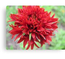 Red Evolution Flower Canvas Print