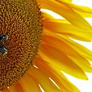 Sunflower with Bumblebees by Susan S. Kline
