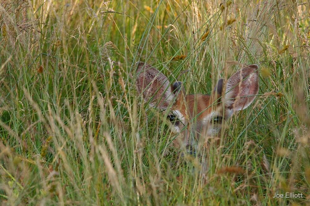 Whitetail Buck Hiding by Joe Elliott