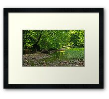 The Beauty of Nature Framed Print
