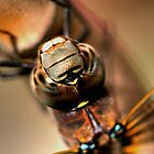 Dragonfly by Larry Trupp
