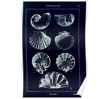 A Handbook Of Ornament With Three Hundred Plates Franz Sales Meyer 1896 0107 Natural Forms Shell Inverted Poster