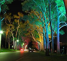 Kings Park Lights by Stephen Horton