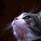 big whiskers by sharon wingard