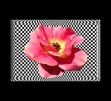 A Rose with a Checkered Background by Rosalie Scanlon