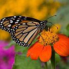 Monarch in the Garden by Adam Bykowski