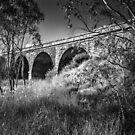 Harcourt Rail Bridge  by Christine Wilson
