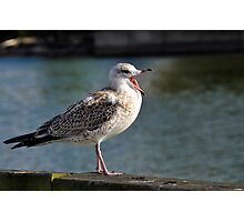 Frustrated Gull Photographic Print