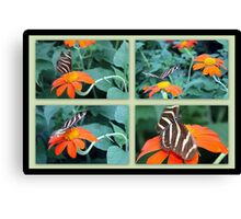 Zebra Longwing Butterfly (Heliconius charithonia) Canvas Print