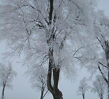Snow Fog by MsPeggyAnn
