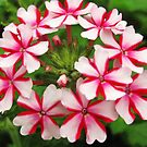 red and white  by ANNABEL   S. ALENTON