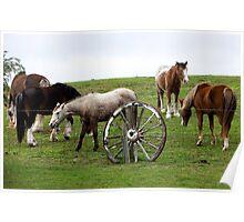Ace hi Ranch,Rye Poster