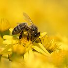 bee on yellow weeds by Nicole W.