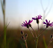 Wild flowers by Brian Edworthy