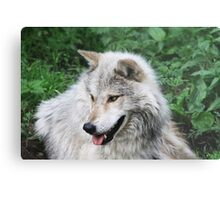 Grisham the Gray Wolf Metal Print