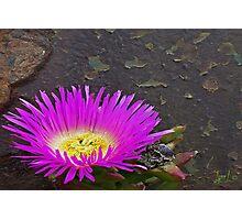 Bloom on Turret Photographic Print